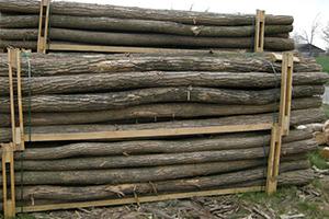 Akacie-stak-bark